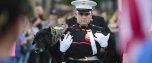 Cena-Marines-service-dog